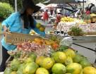 Koloa Farmers Market Kauai